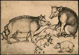 Martin Schongauer - Family of Pigs
